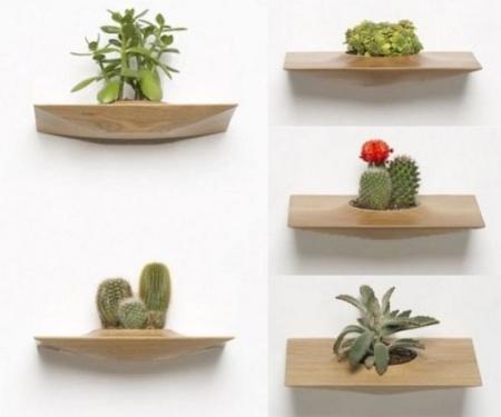 расстановка комнатных растений по полочкам